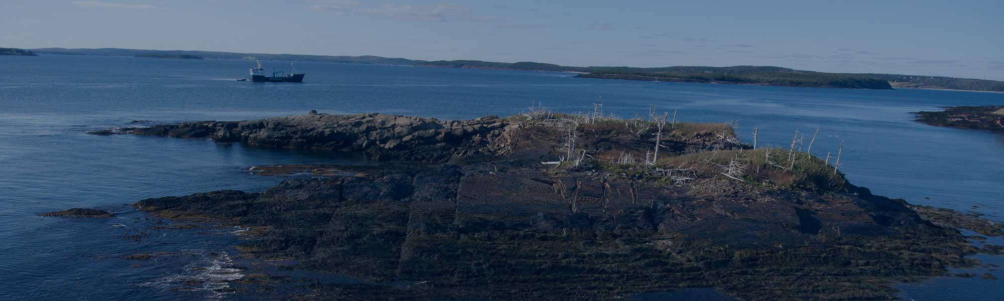 OCEARCH Tracks Return of 4 White Sharks to Nova Scotia