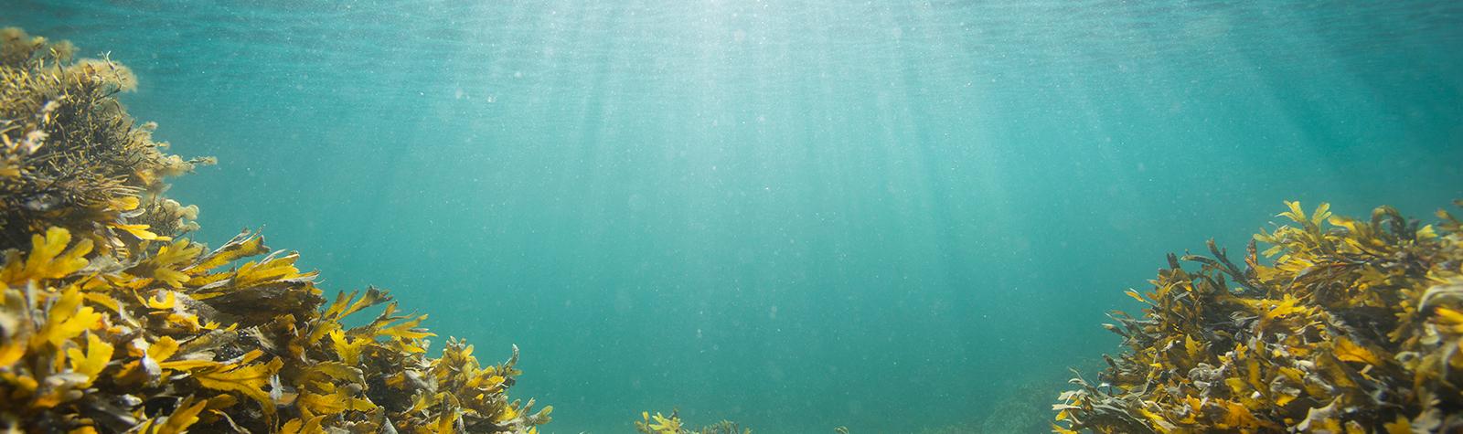 Top 10 Sharks We've Met in Nova Scotia